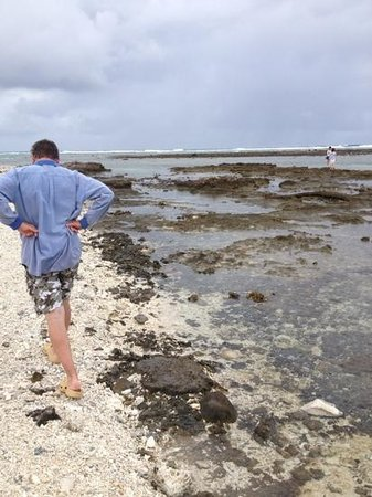 Lady Elliot Island Eco Resort: low tide reef walk