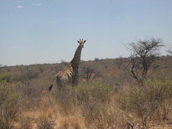 Kalahari Bush Breaks: Zomaar onderweg in het wild op 4 X 4 trial.