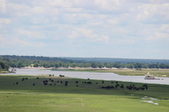 Chobe Game Lodge照片