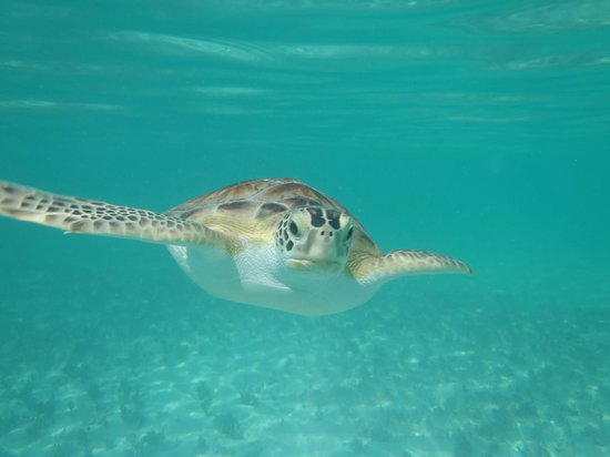 Coral Gardens: Turtle