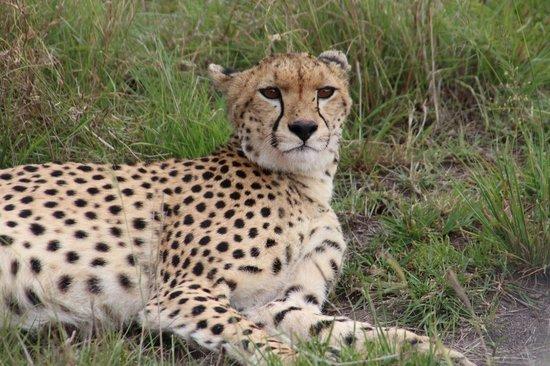 Oloshaiki Camp: Tiere