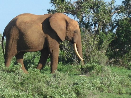 Safari Kenya Watamu - Day Tours照片