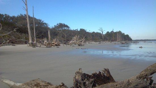 ดริฟวูดบีช: Driftwood Beach looking west