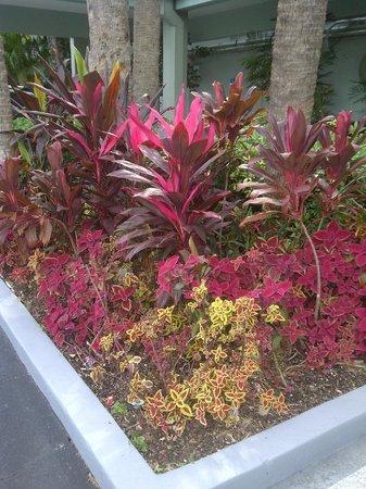 Ramada Fort Lauderdale Oakland Park: Gardens