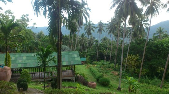 Samui Village : View of the meditation/Yoga building