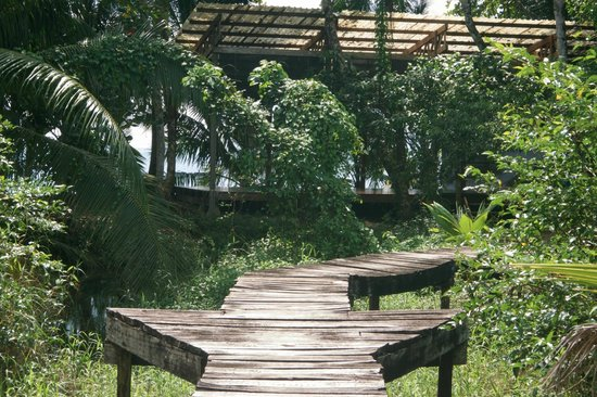Playa Nicuesa Rainforest Lodge : Yoga deck