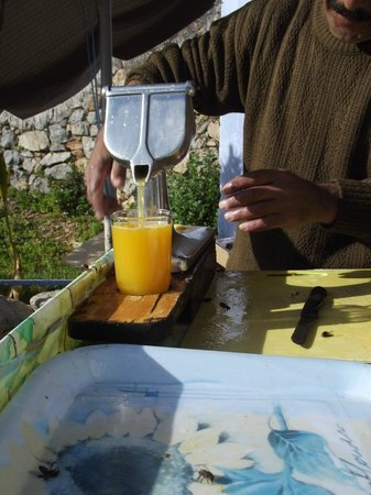 Dar Rass El Maa - Maison d'Hotes: jus d orange pressé à ras el maa