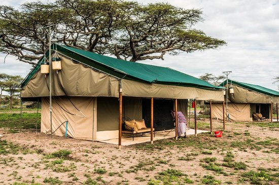 Ang'ata Migration Ndutu Camp 사진