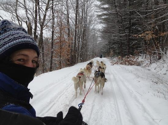 Braeburn Siberians: What a rush cruising down a beautifully snowy trail behind 10 Siberian Huskies!