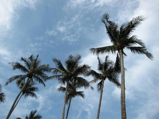 Bintan Spa Villa Beach Resort: coconut tress are also part of the hotel logo