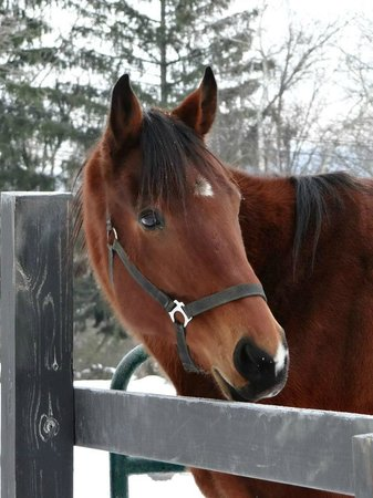 Pinegrove Family Dude Ranch: Another beautiful horse