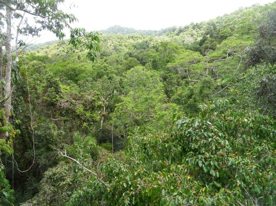 Daintree Discovery Centre: view from the Tower