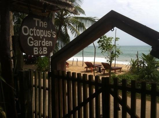 Octopus Garden House: Literally on the beach :-)