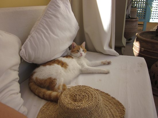 Riad Safa: Cat - breakfast area