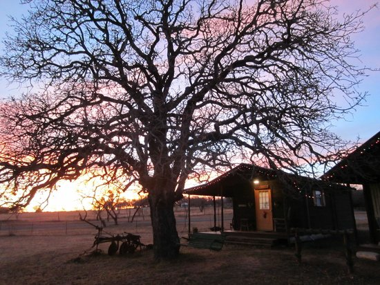 Spotted Pony Ranch: Gorgeous oak tree by the cabins.