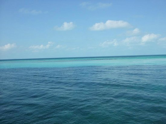 Bimini Big Game Club Resort & Marina: The water is so blue!!!