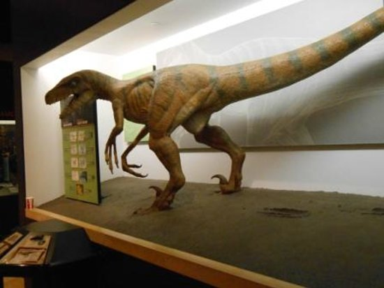 Creation Museum: More dinosaurs