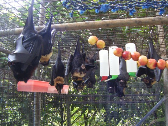 The Bat Hospital Visitor Centre: group feeding