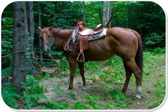 Patriot Farm at the Grand View Tours: Picnic Trail Ride at Patriot Farm at the Grand View