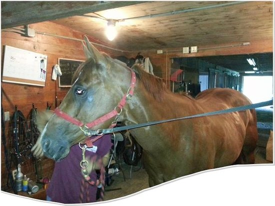 Patriot Farm at the Grand View Tours: Horse camp at Patriot Farm at the Grand View