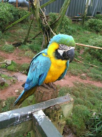 South Lakes Safari Zoo: Parrot in the large aviary
