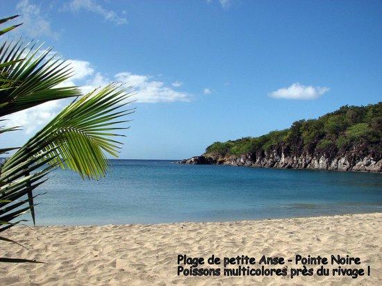 Villa Rose Caraibes : Plage de Petite Anse sur Ferry (poissons tropicaux)