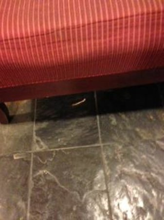Embassy Suites by Hilton Chicago Downtown: Chicken bones on floor in the lobby - it was there all day