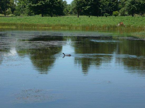 KarMichael Farm Guesthouse: le petit lac à coté