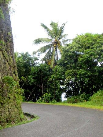 Coco Palm Resort : Les routes de Ste-Lucie