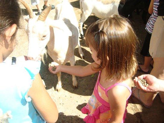 Hotel Fazenda Campo dos Sonhos: alimentando os animais maria eduarda