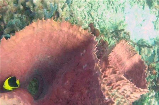 Dive Fair Helen : Le récif de corail.