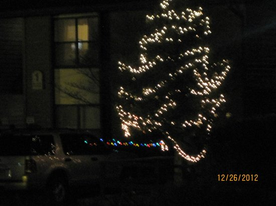 Oakmont Resort: Decorated tree in the center of the buildings, across from 3 and in front of 1