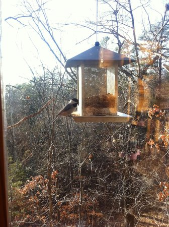 Treehouse Cottages: There is a birdfeeder that hangs by the porch
