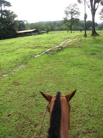 La Carolina Lodge: La ballade a cheval a travers les arbres remplis de clémentines et les montagnes