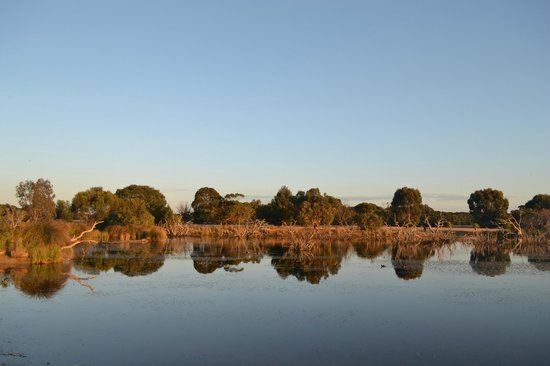 Western KI Caravan Park and Wildlife Reserve: Lagoon, early morning