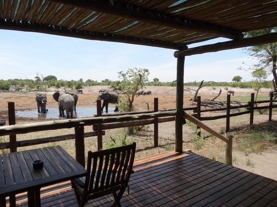 Savute Safari Lodge: View from the room
