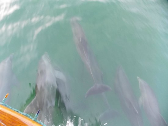 Hattie Annie Charters-Day Boat Tours: Dolphins swimming next to the boat