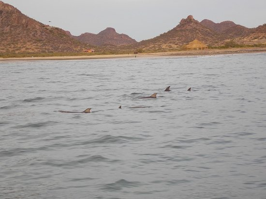 Hattie Annie Charters-Day Boat Tours: Dolphins near the boat