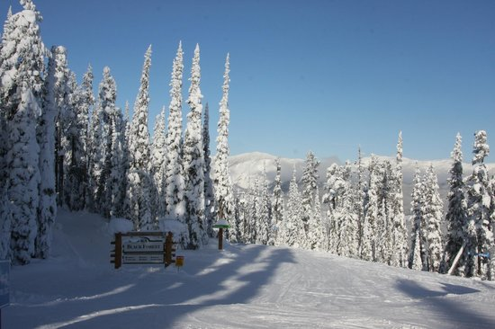 Alpenglow Bed and Breakfast : Kimberley Alpine resort