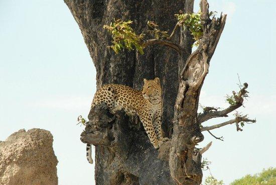 Wilderness Safaris Little Vumbura Camp: gute Aussicht