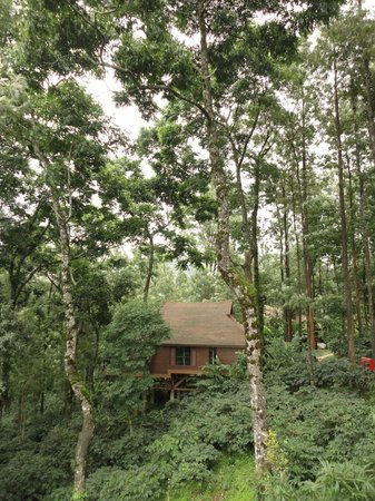 The Tamara Coorg: Cabin amidst the coffee planation and silver oak trees