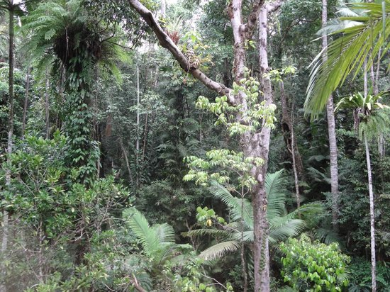 Daintree Discovery Centre: Beautiful Daintree photo from the walkway