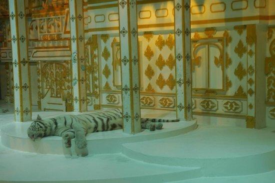 Phuket FantaSea: White tiger exhibit