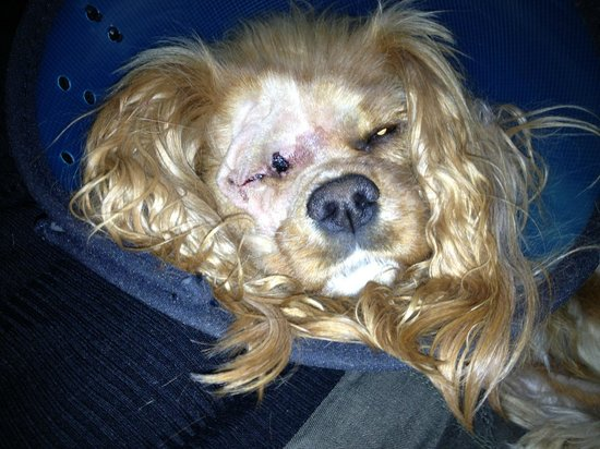 Ridge Hall Cottages: Our dog after her operation