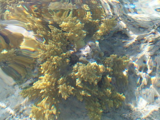 Dessole Nesco Waves: море