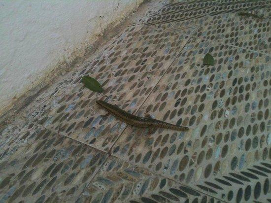 Soviva Resort: Lizard