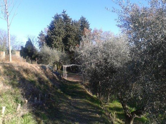 Il Paluffo - Main House B&B: Passeggiate tra gli ulivi