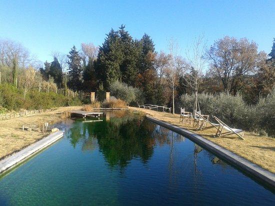 Il Paluffo - Main House B&B: Bio-lago (piscina ecologica)