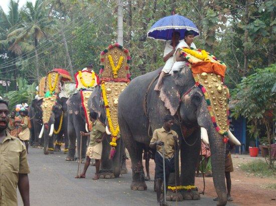 Mummy Bamboo House: Elephant festival 15 elephants