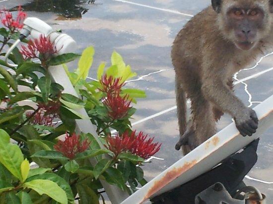 Hyatt Regency Kuantan: beware the monkeys